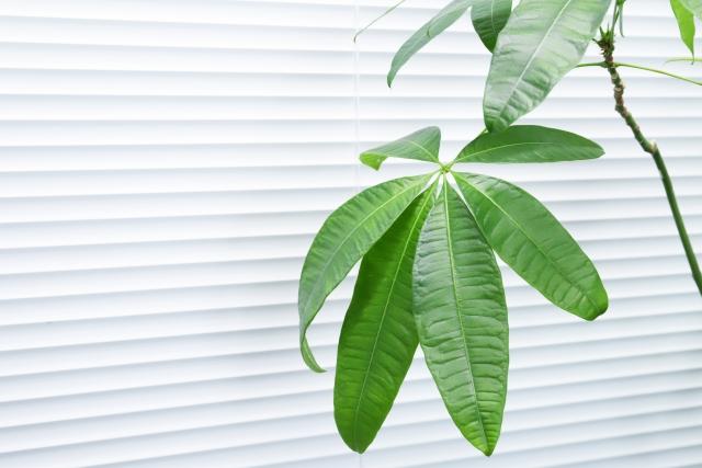 シャッターと植物